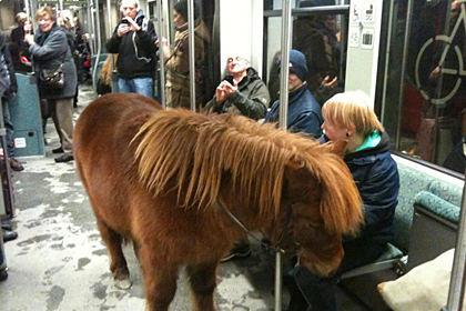 Ich glaub mich tritt ein Pferd.